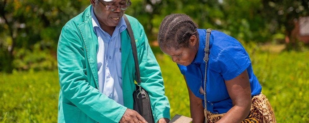 Plant doctor in Malawi